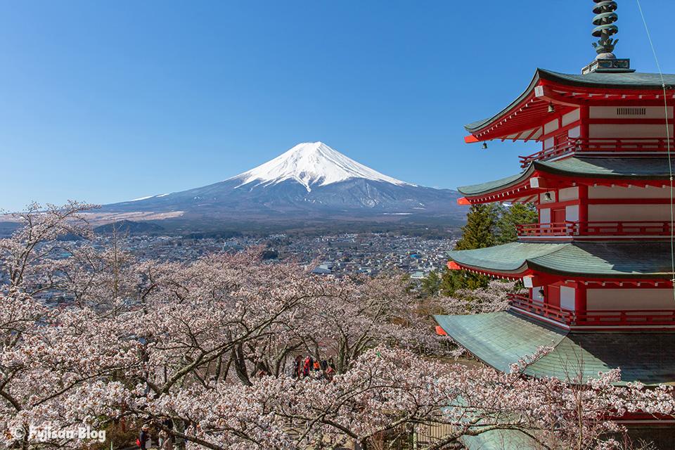 【富士山写真】2019年新倉山浅間公園(忠霊塔)からの桜と富士山