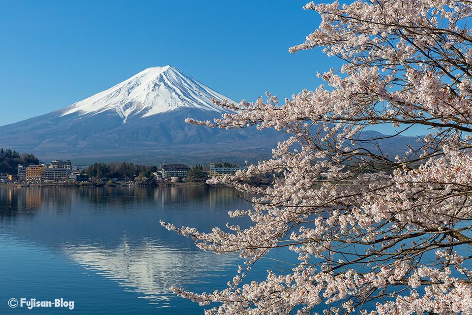 【富士山写真】2019年河口湖からの桜と富士山(4/18)