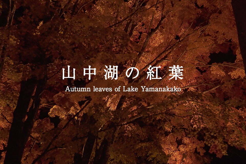 山中湖の紅葉 Autumn leaves of Lake Yamanakako